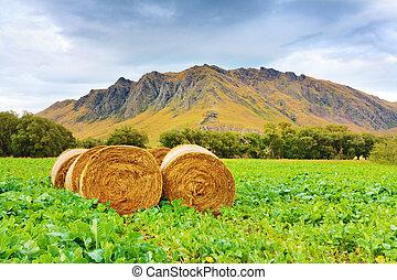 Rural lanscape