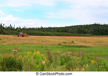 Rural New Brunswick farmland - Colorful rural farmland scene...