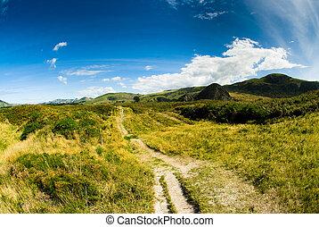 rural, paisagem, em, dunedin