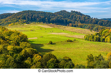 rural pasture fields on Carpathian hills - rural pasture...