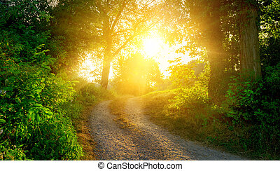 Rural path illuminated by the golden sun