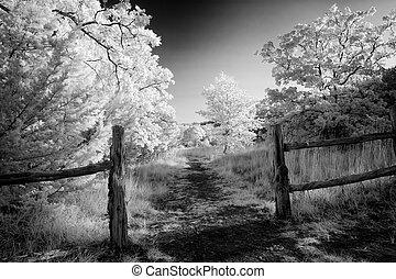 Rural Path in Texas