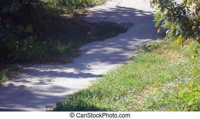 Rural path shady in sunny