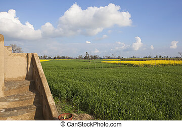 the rural landscape of Punjab India with mud built steps of a traditional building surrounded by fields of wheat and mustard under a blue cloudy sky