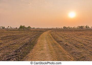 rural road going through prairie under sunset sky