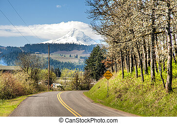 Rural road, Hood River Valley, Oregon - Rural road with Mt....
