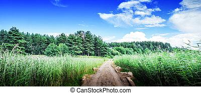 Rural road in field