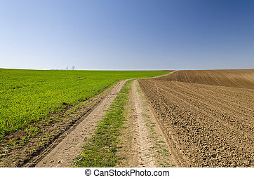 Rural road in fields to cloudy horizon