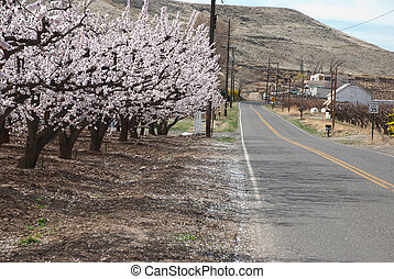 rural road in spring