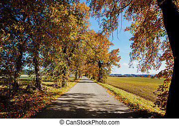 rural Road in the autumn with yellow trees
