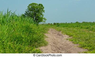 Rural road in the field