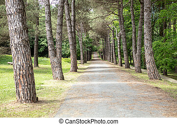Rural road lined by old trees