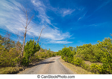 Rural road near beach with green tree