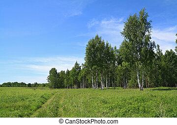 rural road near birch wood