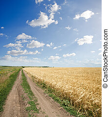 rural road near field of wheat