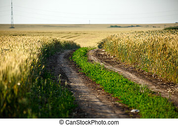 Rural road through a wheat field