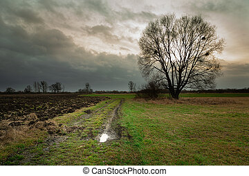 Rural road through fields and tree without leaves, dark clouds on the sky
