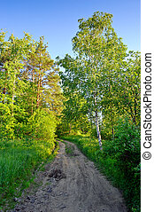 Rural road through forest