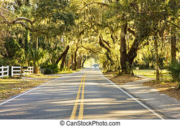 A two lane road under old oak trees and spanish moss
