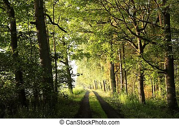 Rural road through the deciduous forest
