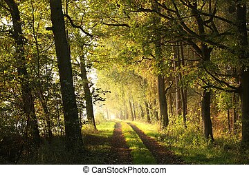 Rural road through the forest