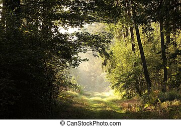 Rural road through the forest in the morning