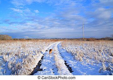 rural road through winter field