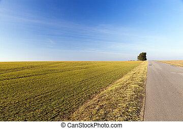 rural road, tree