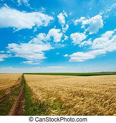 rural road under cloudy sky in golden field