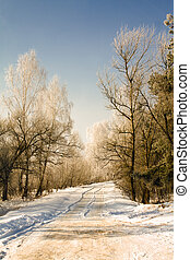 Rural road (winter)