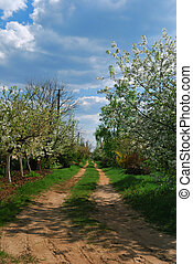 rural road with flowers trees