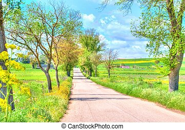 rural road with trees along