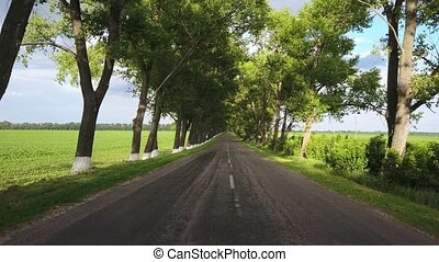 Rural roadway between trees - Country roadway between the...