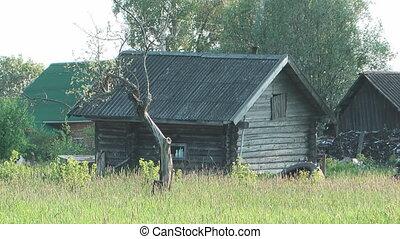 Rural. - Russian summer rural landscape.