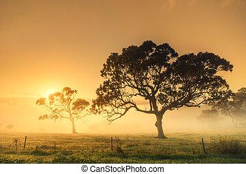 rural, salida del sol
