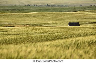 Rural Saskatchewan in summer with crops Canada