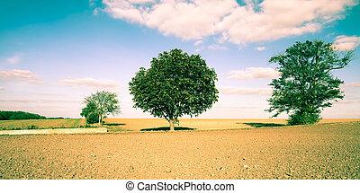 Rural scene - A beautiful rural scene of English farmland...