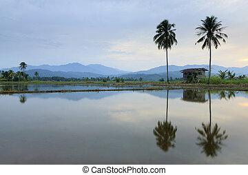 Rural scene at sunset in Borneo, Sabah, Malaysia