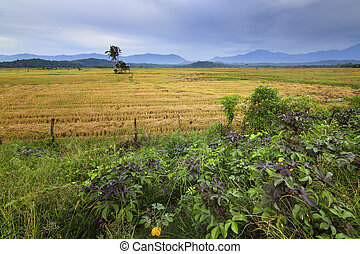 Rural scene deep inside Borneo