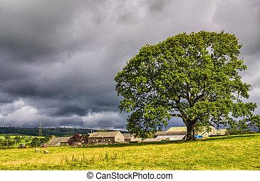 Rural scene in Cumbria