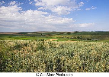 Rural scene in the springtime