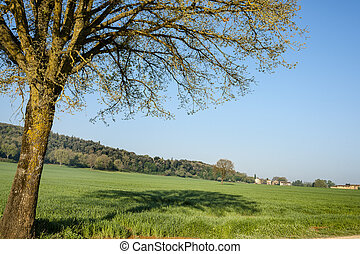 Rural scene in Tuscany, Italy.
