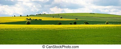 rural scene on the ridgeway, england - Fields of rape seed ...