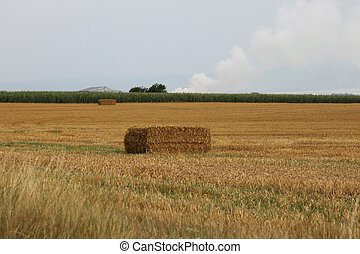 Rural scene with a field and bales of hay