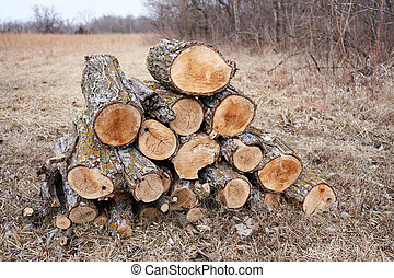 Rural scene with a pile of logs near the forest