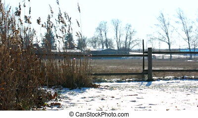 Rural scene with plants in the winter