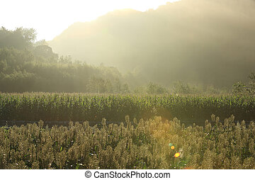 rural scene with sorghum and maize crop farm at the foot of...