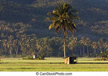 Rural scenery deep inside Sabah