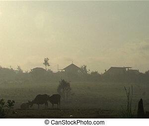 Rural scenery of Bali. Originating camera Sony PD 170, tape ...