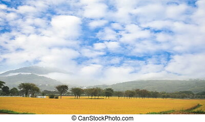 Rural scenery of green farm under n